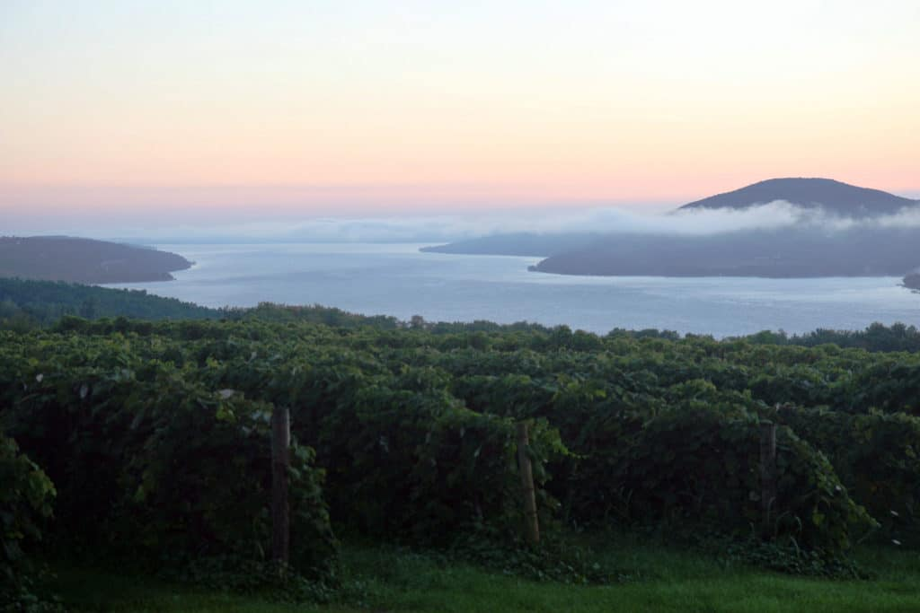 sunrise_overlooking_a_vineyard_in_the_finger_lakes