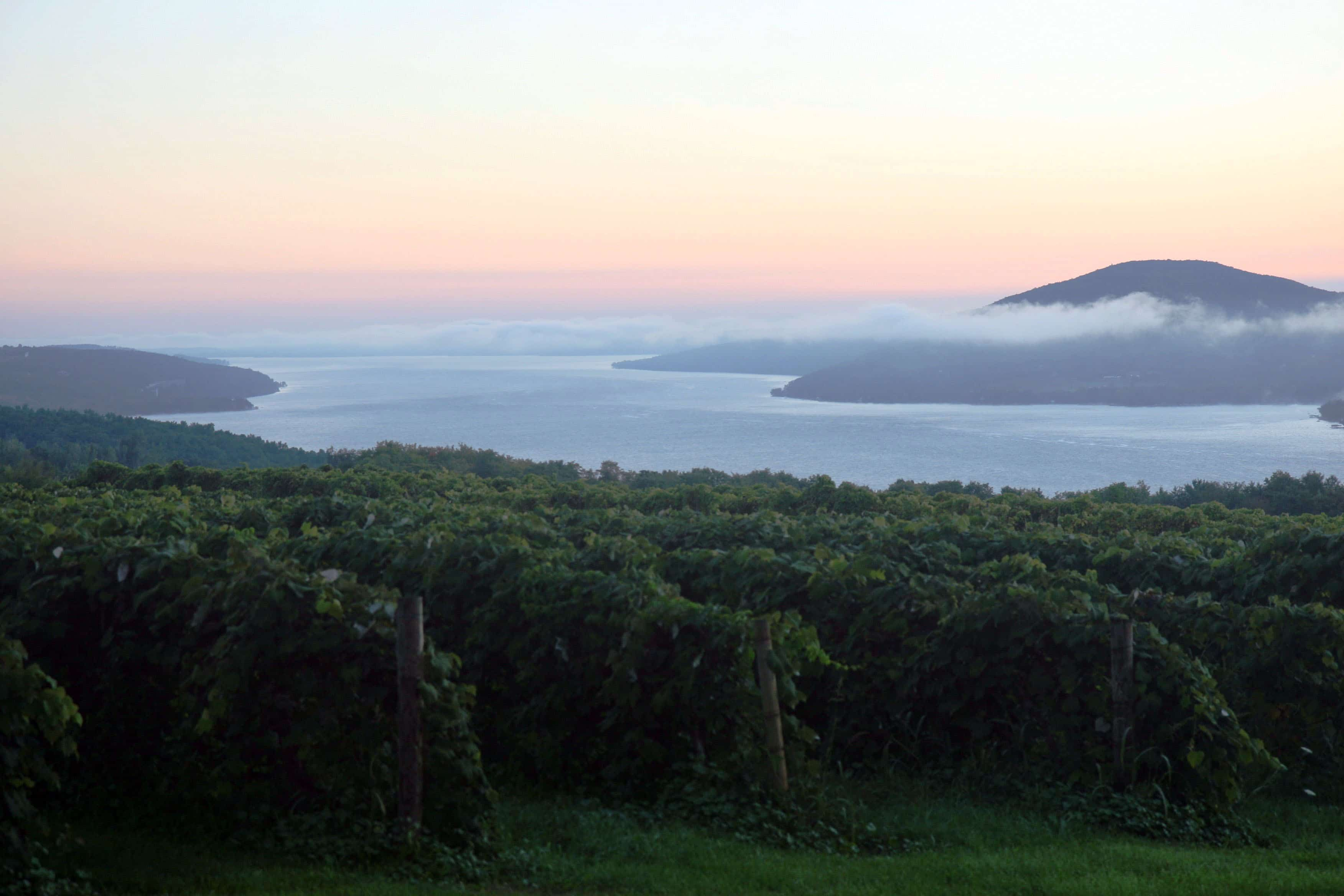 sunrise overlooking vineyard in finger lakes